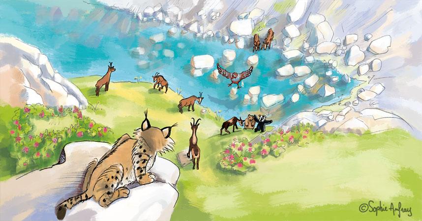 Un lynx guette un groupe d'isards du haut de son rocher.