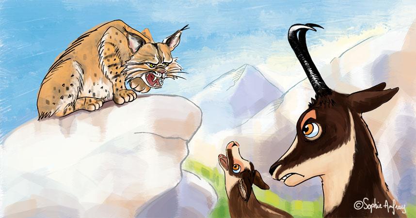 Un lynx menace un isard et son petit.