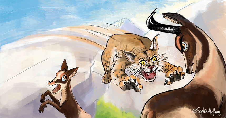 Un lynx attaque un isard.