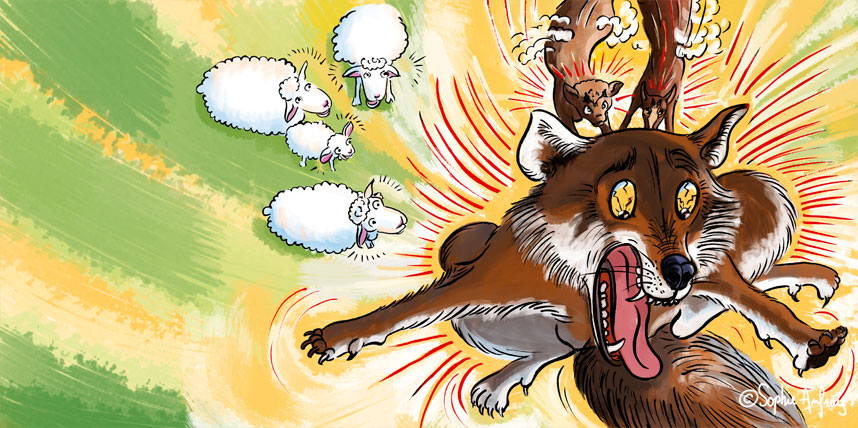 Le loup n'est pas le bienvenu dans le troupeau de moutons.