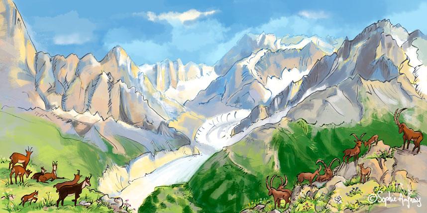 Chamois et bouquetins dans les Alpes.