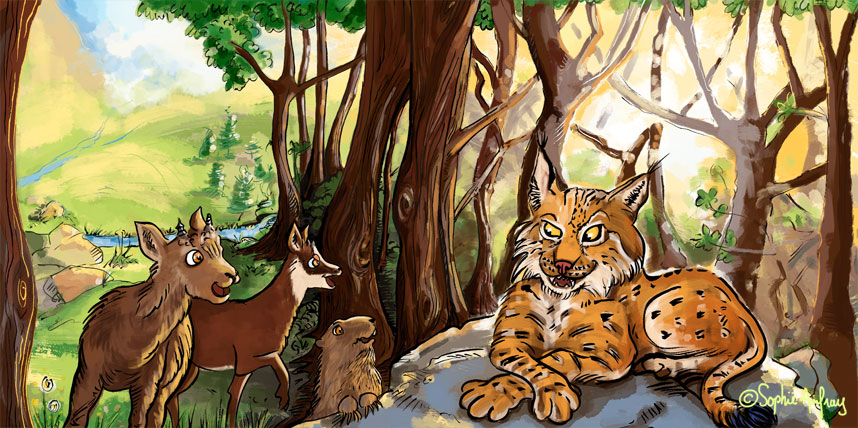 Rencontre avec un lynx.