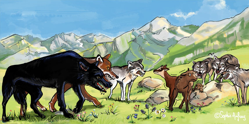 Loups qui grognent et menacent Rupi et Bouki.