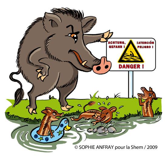 Dessin humoristique d'un sanglier qui montre le panneau danger à ses petits qui se baignent au bord d'une rivière.