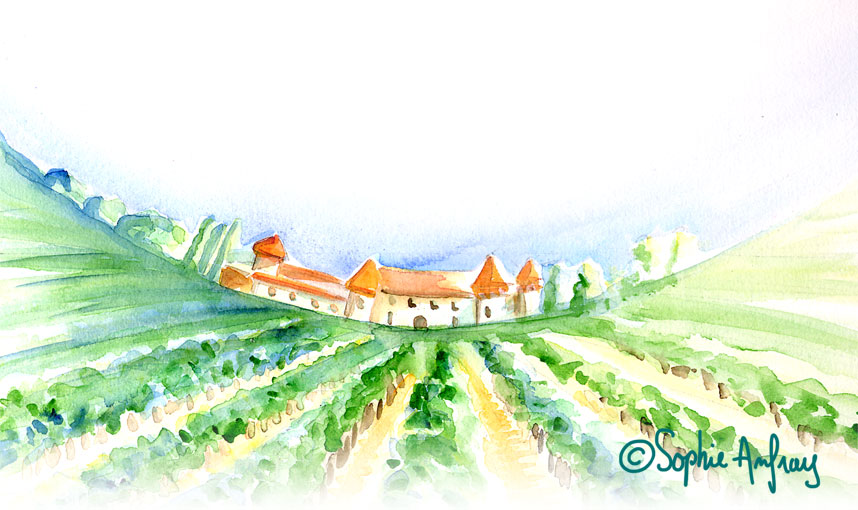 Aquarelle d'un vignoble.