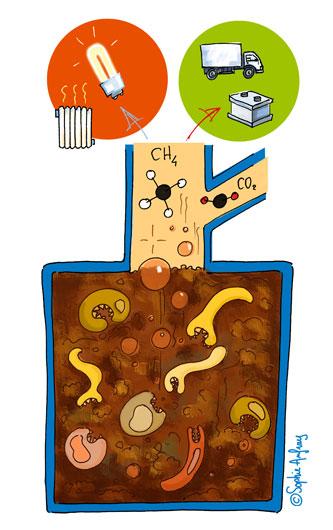 Shéma sur la cogénération issue de la biomasse.
