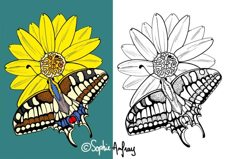 Dessin d'un machaon sur une fleur.