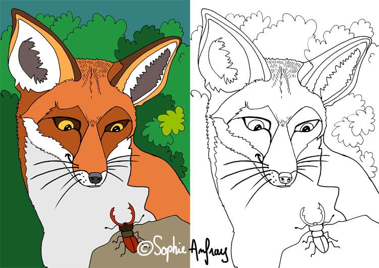 Dessin d'un renard devant un lucane cerf-volant.