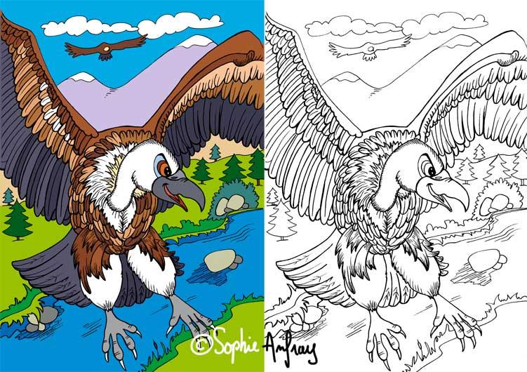 Dessin d'un vautour en vol.