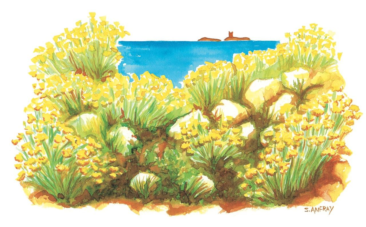 Aquarelle d'une garrigue et vue sur la mer.