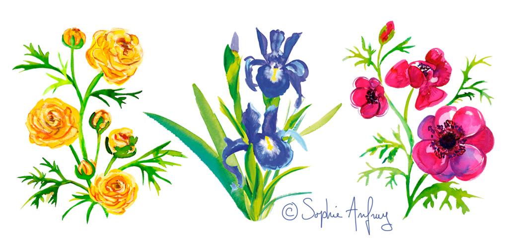 Aquarelle d'une renoncule, d'un iris et d'une anémone.
