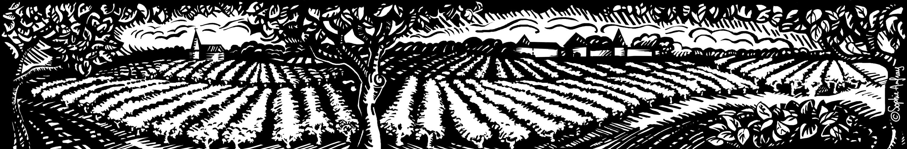 Frise en noir et blanc d'un vignoble.