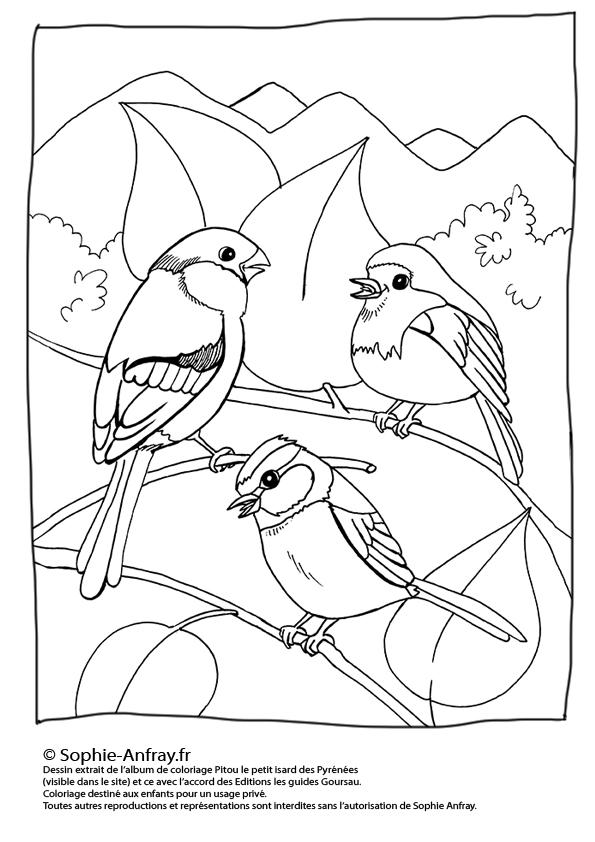 Coloriage pour enfant - Le bouvreuil, la mésange et le rouge-gorge