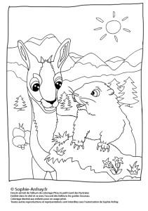 Coloriage pour enfant - Pitou et la marmotte