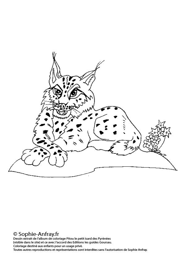 Coloriage pour enfant - Le lynx