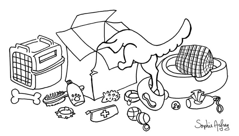 Chien la tete dans un carton au milieu d'équipement canins